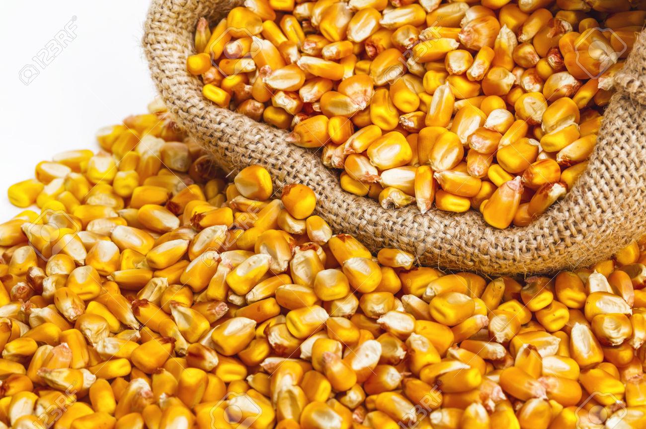 saco verde alimentos a granel